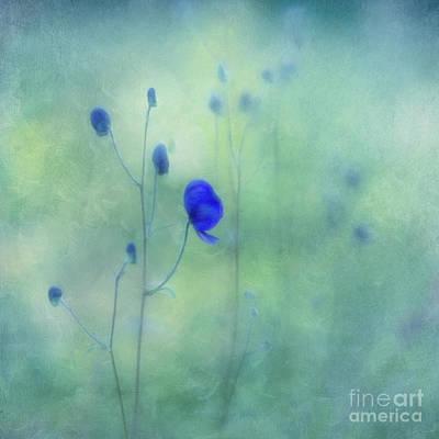Lensbaby Photograph -  Indigo by Priska Wettstein