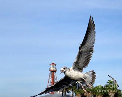 Seagulls Photograph - Kaah by Scott Cameron