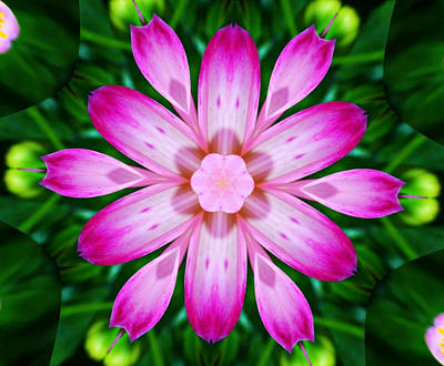 Kaleidoscope Of A Dahlia Print by Cathie Tyler
