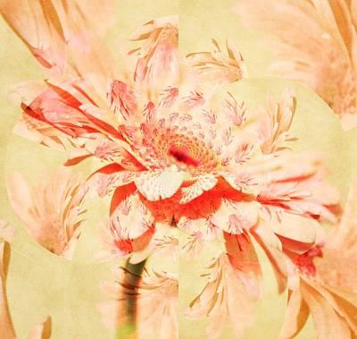 Purple Flowers Digital Art - Kaleidoscope Of A Gerber Daisy by Cathie Tyler