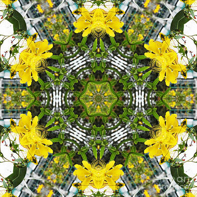 Kaleidoscope Of Showy St Johns Wort Print by Wendy Townrow