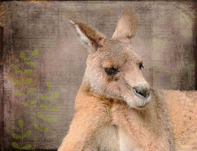 Kangaroo Mixed Media - Kangaroo Grunge by Rosalie Scanlon