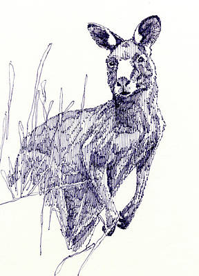 Kangaroo Drawing - Kangaroo by John D Benson