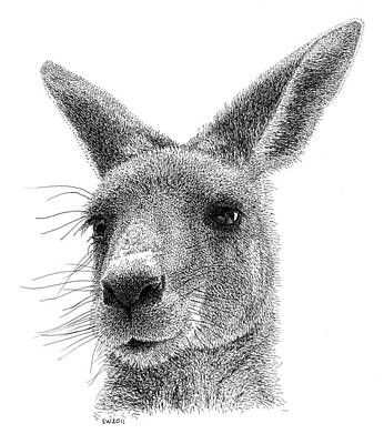 Kangaroo Drawing - Kangaroo by Scott Woyak