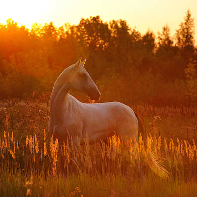 Gold Horse Photograph - Kaytag by Artur Baboev