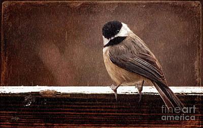 Chickadee Digital Art - Kerflustered by Lois Bryan