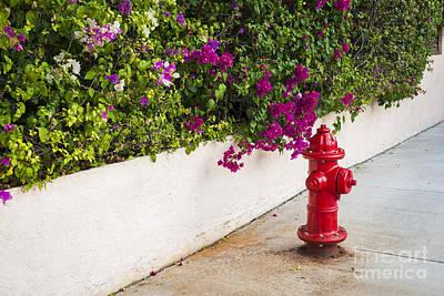 Key West Fire Hydrant Print by Elena Elisseeva