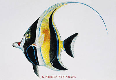 Sealife Art Painting - Kihikihi by Hawaiian Legacy Archive - Printscapes
