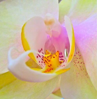 Orchids Digital Art - Killing Me Softly by Gwyn Newcombe
