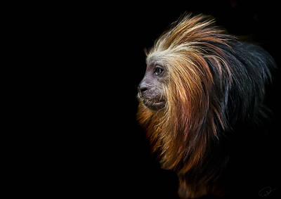 Primate Photograph - King Of The Jungle by Paul Neville