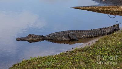 Florida Wildlife Photograph - King Of The Lake by Zina Stromberg