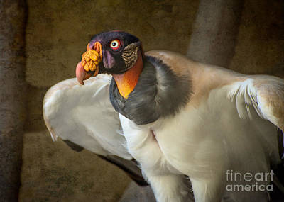 King Vulture Print by Jamie Pham
