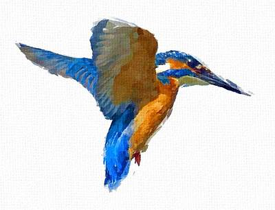 Kingfisher Print by Chris Butler
