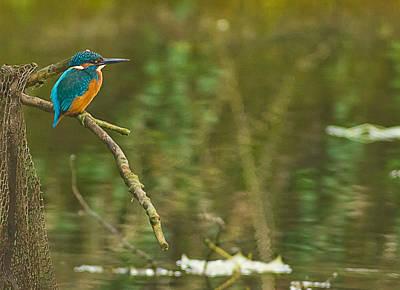 Kingfisher Original by Gary Maynard