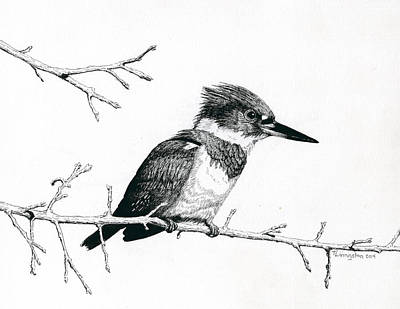 Kingfisher Drawing - Kingfisher by Timothy Livingston