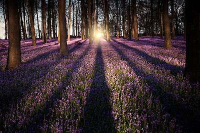 Bluebells Photograph - Kingswood Bluebells by Ian Hufton