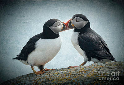 Puffin Digital Art - Kiss by Jim  Hatch