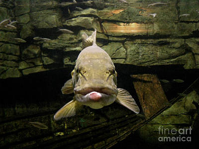 Muskellunge Photograph - Kiss Me You Fool by Donna Brown