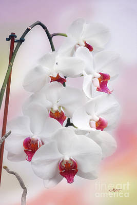 Orchids Digital Art - Kissed By A Dream by Jutta Maria Pusl