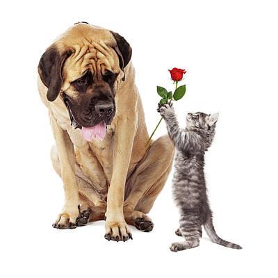 Kitten Handing Big Dog A Rose Flower Print by Susan Schmitz