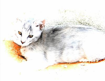 Gray Tabby Digital Art - Kitten Tranquility by Dorothy Berry-Lound