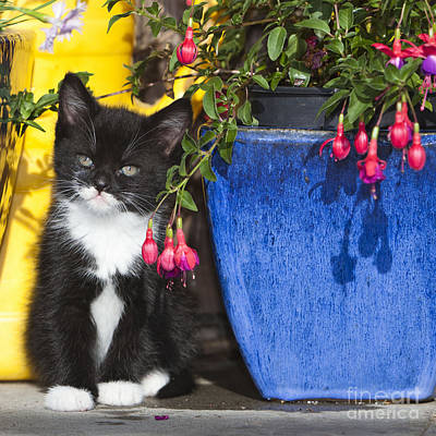 Kitten With Plants Print by Duncan Usher