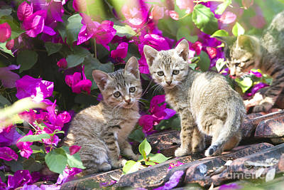 Kittens With Flowers Print by M. Watson