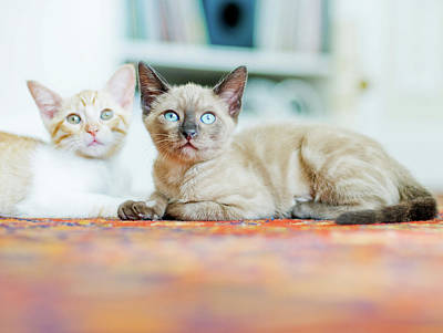 Green Eyes Photograph - Kitties Sisters by Cindy Loughridge
