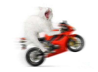 Digital Altered Photograph - Kitty On A Motorcycle Doing A Wheelie by Oleksiy Maksymenko