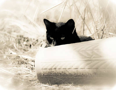 Hiding Photograph - Kitty Stalks In Sepia by Lori Coleman