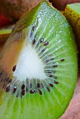 Kiwi Photograph - Kiwi Seed Display by Gwyn Newcombe