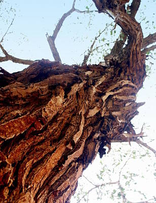 knarly Tree Print by Marty Koch