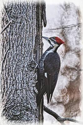 Woodpecker Digital Art - Knock Knock by Lois Bryan