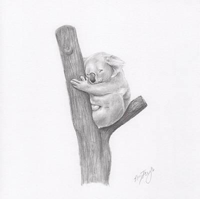 Marsupial Drawing - Koala by Nancy Ferry