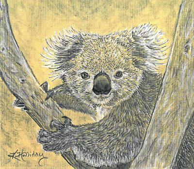 Marsupial Drawing - Koala Study by Kristy Holliday Main