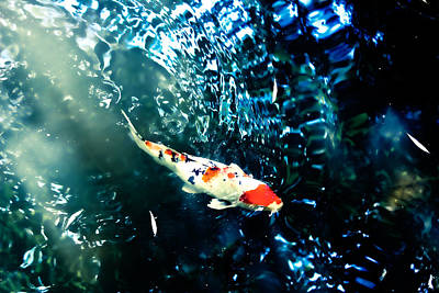 Koi In Rippled Waters Print by Colleen Kammerer