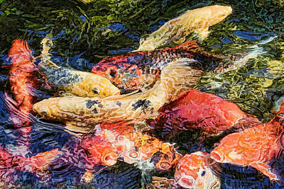 Frenzy Photograph - Koi Pond By H H Photography Of Florida by HH Photography of Florida