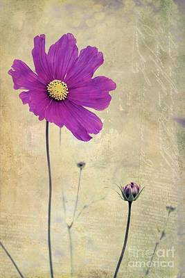 Purple Floral Photograph - L Elancee - V04t3 by Variance Collections
