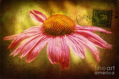 Abstracted Coneflowers Photograph - La Fleur by Angela Doelling AD DESIGN Photo and PhotoArt