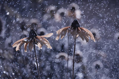 Winter Flowers Photograph - La Fraicheur D'un Matin D'a?ta? by Fabien Bravin