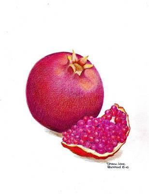 Culinary Drawing - La Grenade by Sharon Blanchard