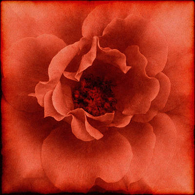 Floral Mixed Media - La Primavera by Georgiana Romanovna