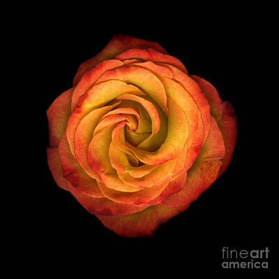 La Vie En Rose Original by Christian Slanec