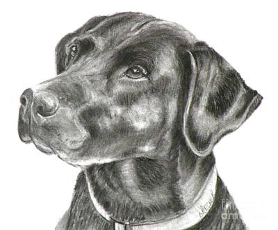 Black Labrador Drawing - Lab Charcoal Drawing by Susan A Becker