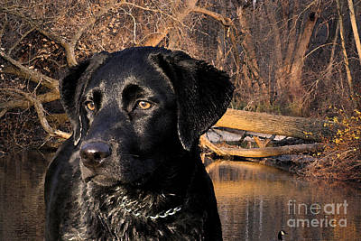 Lab Digital Art - Labrador Retriever by Cathy  Beharriell