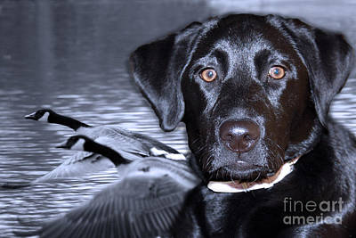 Lab Digital Art - Labrador Retriever Thoughts  by Cathy  Beharriell