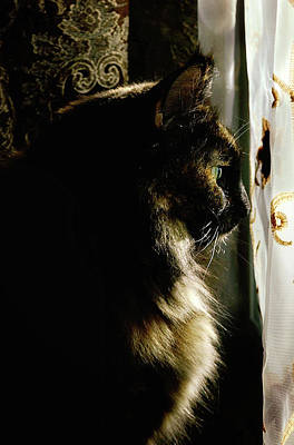 Cat Photograph - Lady In Waiting by Camille Lopez