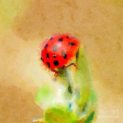 Ladybug Photograph - Ladybug Ladybug Ladybug by Kerri Farley