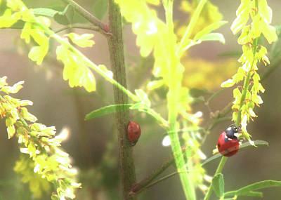 Ladybug Ladybug Print by Toni Hopper