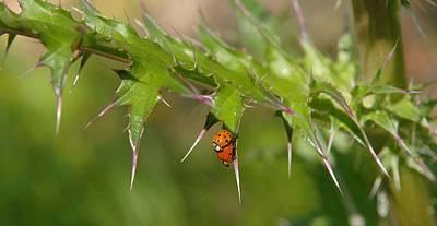 Eye4life Photograph - Ladybugs by Alicia Morales